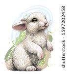 Rabbit. Color  Artistic ...