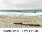 Logs Drifting To The Beach