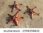 Several Large Specimens Of...