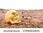 Abandoned Human Skull In The...