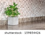 pot with green mint on kitchen... | Shutterstock . vector #159854426