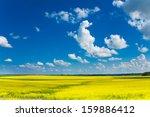 Beautiful Yellow Flower Fields...