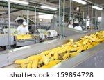 corn cob on production line in... | Shutterstock . vector #159894728