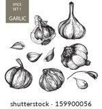 hand drawn botanical hand drawn ... | Shutterstock .eps vector #159900056
