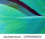 Aqua menthe color leaf macro texture background. Trendy green & blue turquoise color (aqua menthe) of 2020 year. Tropical leaf background - nature concept top view. Leaf texture closeup in aqua menthe