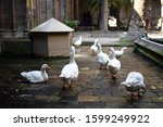 Tame White Geese   Wooden...
