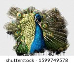 Exotic Blue Peacock Bird....