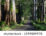 tree avenue of allakolla estate ... | Shutterstock . vector #1599889978