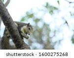 Small photo of brown redent squirrel is eating food on the tree with bokeh background