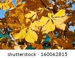 autumn leaves of horse chestnut ... | Shutterstock . vector #160062815