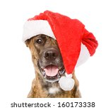 Large Dog In Red Christmas...