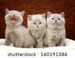 Stock photo group of cute gray british kittens 160191386