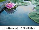 Beautiful Pink Lotus  Water...