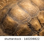 Stock photo beautiful turtle shell design 160208822