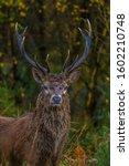 Red Deer Found Around Forests...