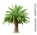 green beautiful palm tree... | Shutterstock . vector #160257176