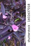 Purple Heart Tree It Is...