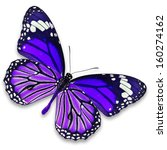 Stock photo purple butterfly isolated on white background 160274162