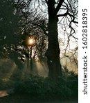 Winter\'s Morning In Avenham An...