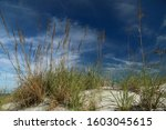 Sea Oats Sway in the Breeze in Jacksonville Beach, Florida