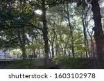 Small photo of Tree canopy at Trammel Crow Center