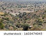 South African Karoo Landscape...