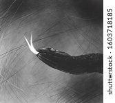 the image of snake. blsck snake ... | Shutterstock . vector #1603718185