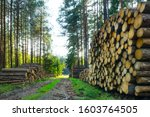 Stacked Felled Wood Logs....