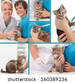 Little kitten at the veterinary collage- focus on the cat - stock photo