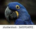 Beautiful Bird Sitting Close U...
