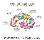 functional areas of the human... | Shutterstock . vector #1603936102