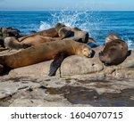 Seals Sleeping On The Rocks