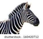 Beautiful Zebra Portrait With...