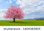 Spring Time In Nature With...