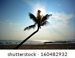 silhouette of bent coconut tree ... | Shutterstock . vector #160482932