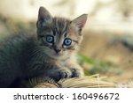 Stock photo portrait of an adorable kitten outdoors 160496672