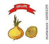 onions sketch set   vector