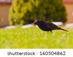 thrush who are looking for... | Shutterstock . vector #160504862