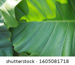 green tree leaf plant natural | Shutterstock . vector #1605081718