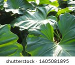 green tree leaf plant natural | Shutterstock . vector #1605081895