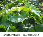 green tree leaf plant natural | Shutterstock . vector #1605082015