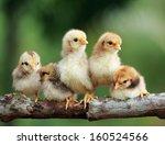 group portrait of babies... | Shutterstock . vector #160524566