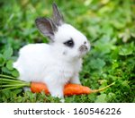 Funny Baby White Rabbit With A...