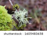 A Macro View Of Moss And...