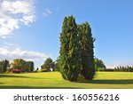 a large green meadow in the... | Shutterstock . vector #160556216