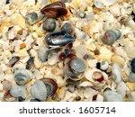 Background of seashells - stock photo