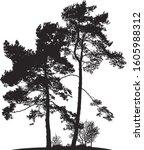 realistic pine tree silhouette  ... | Shutterstock .eps vector #1605988312