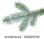 fir tree branch slightly... | Shutterstock . vector #160604246
