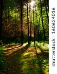 forest trees with sunlight in... | Shutterstock . vector #160624016
