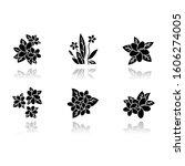 plumeria drop shadow black... | Shutterstock .eps vector #1606274005